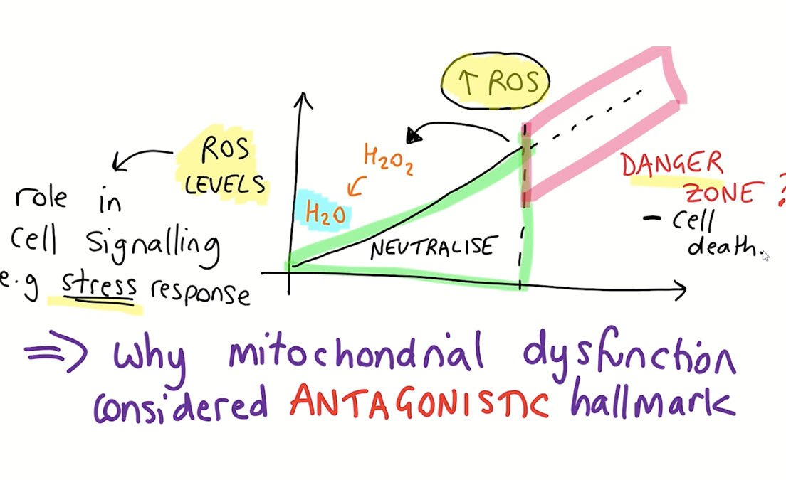 The Sheekey Science Show - Mitochondria